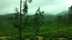 Thekkady tea estates